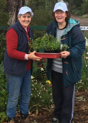 Two ladies standing in a garden, holding a tray of plants